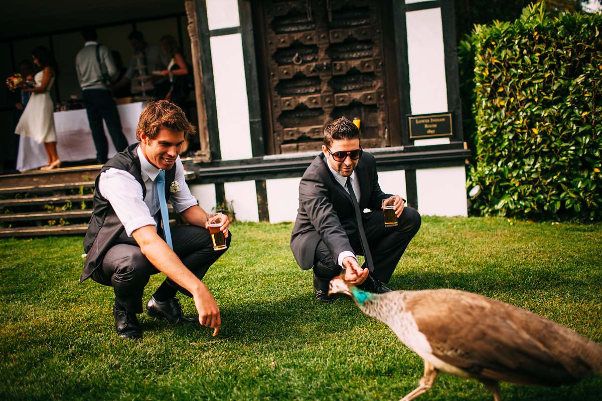 peacocks at a wedding
