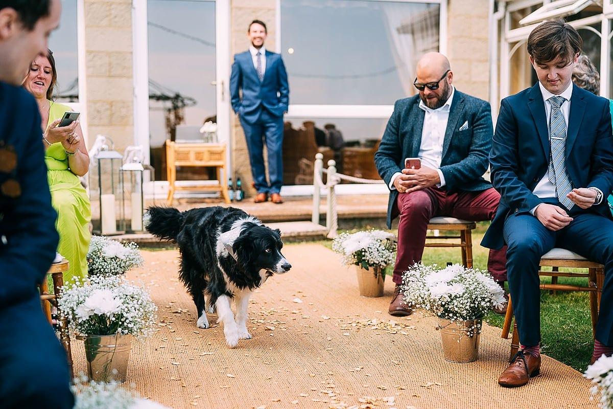 sheep dog at wedding